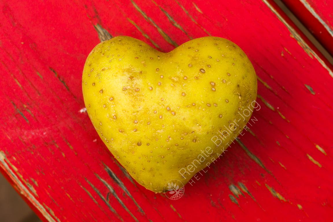 Die Kartoffel (Solanum tuberosum), eine Heilpflanze aus dem Repertorium von Heilpraktikerin Renate Bihler-Jörg.